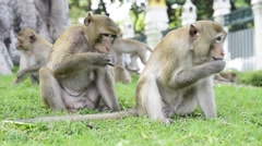 View of monkey family Stock Footage