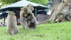 Monkey family Stock Footage