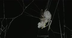 Spider on the Danube bridge Stock Footage