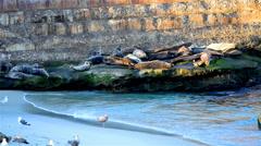 Seals on the rocks to sleep, sunbathe Stock Footage