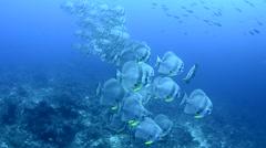 Schooling Baitfish Stock Footage