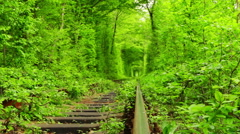 Old Railway Track in the Green Tunnel Stock Footage