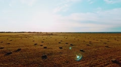 Hay stacks on meadow against sunset background Stock Footage