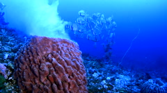 Spawning Barrel Sponge and Batfish Stock Footage