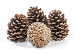 Studio Shot Cluster of Four Old  Pine Cones - stock photo