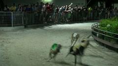 VUNG TAU - Dog Racing Stock Footage