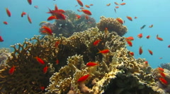 Scuba diver underwater close to coral reef Stock Footage