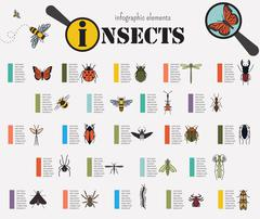 Insects infographic template Stock Illustration