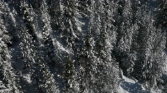 Aerial of snowcapped pine trees Stock Footage