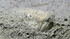 Stargazer Fish Hiding in the Sand 3 Stock Footage