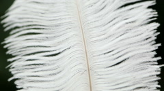 Goose feather macro, the wiring Stock Footage