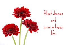 Red gerbera flowers with inspirational quote. Kuvituskuvat