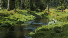 Fly fishing  a lush spring creek in new zealand Stock Footage