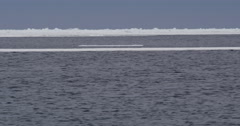 Narwhals swimming in choppy water among sea ice Stock Footage