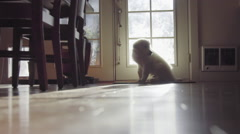 Cute White haired puppy sits and waits by door Stock Footage
