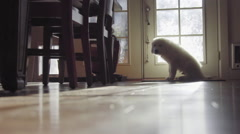 Cute Lonely White haired puppy sits and waits by door Stock Footage