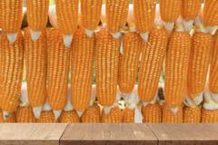 Wooden table for display or montage your product with blur background of corn Stock Photos