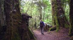 Female hiker in tarkine rainforest  in tasmania, australia Stock Footage
