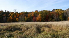 Field Fall Colors Timelapse Stock Footage