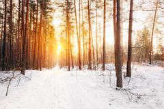 Amazing Beautiful sunset sunrise sun sunshine in sunny winter sn - stock photo