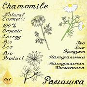 Chamomile. Set of 3 drawing and hand-lettering - stock illustration