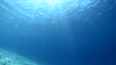 Sunlight Filters Through Blue Water Stock Footage
