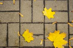 Autumn leaves on the pavement slab Stock Photos