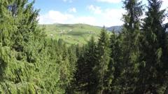 Flight between trees Stock Footage