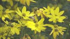 Slow Motion Bee on Yellow Flower Stock Footage