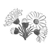 Hand drawn bouquet of daisy flowers isolated on white background, black Stock Illustration