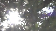Sunshine Glare Through Branches, Slow Motion Stock Footage