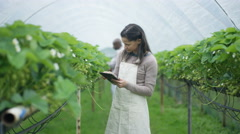 4K Portrait of smiling farm worker with computer tablet in fruit orchard - stock footage