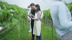 4K Farm workers with computer tablet checking fruit crop in agricultural orchard Stock Footage