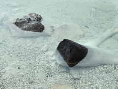 Debris sitting in shallow pool - stock photo