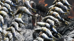 Sardines fish skewer food at fire Stock Footage