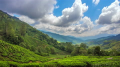 Green hills of tea plantation in Cameron Highlands estates in rural Malaysia Stock Footage