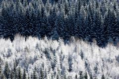 Hoar frost on forest Stock Photos