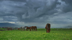 Horses on green grass in the background of the mountain landscape Stock Footage
