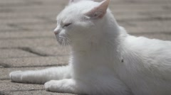 White Cat, Slow Motion Stock Footage