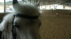 A white horse in a riding area - stock footage
