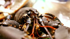 Seafood. Moving crabs at the La Boqueria food market, Barcelona, Spain Stock Footage