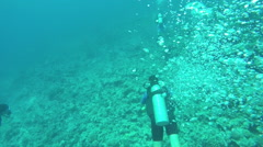 UNDERWATER: Scuba divers diving above stunning diverse rocky coral reef - stock footage