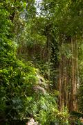 Evergreen jungle forest in sunny day. Natural background. Thailand. - stock photo