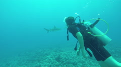 UNDERWATER: Young boy diving and swimming with sharks above rocky coral reef - stock footage
