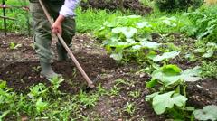 Senior man hoeing vegetable garden soil Stock Footage