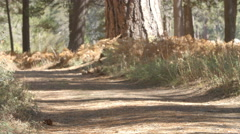 Grandparents and kids cycling on forest trail, slow motion Stock Footage