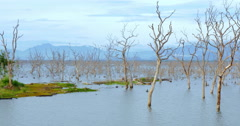Wetlands view of Yala national park in Sri Lanka. Old dead trees in flooded land Stock Footage
