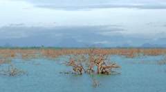 Flooded land after monsoon season in Yala park in Sri Lanka. Natural habitat - stock footage