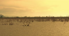 Golden sunset sky over flooded land with dead trees of Yala park in Sri Lanka Stock Footage