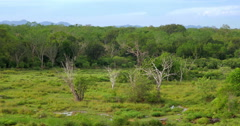 Yala park safari in Sri Lanka. Aerial view of wild forest and endemic nature Stock Footage